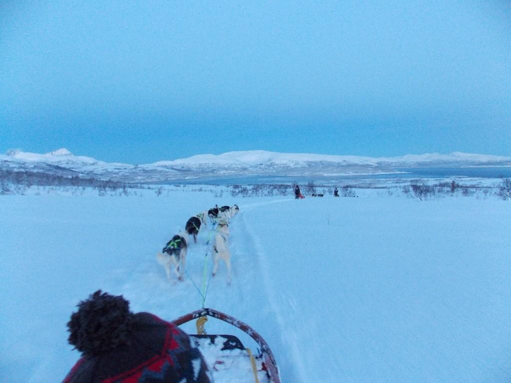 Passeio de dogsledding no Tromsø Villmarkssenter, cidade de Tromsø. Dez/13.