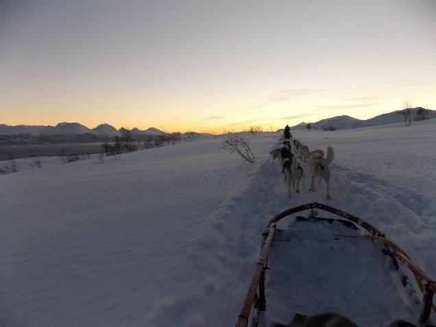 Passeio de dog sled.