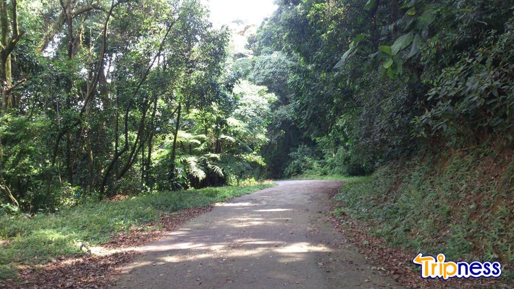Parque da Cantareira