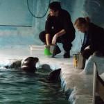 Show das focas no Polaria.